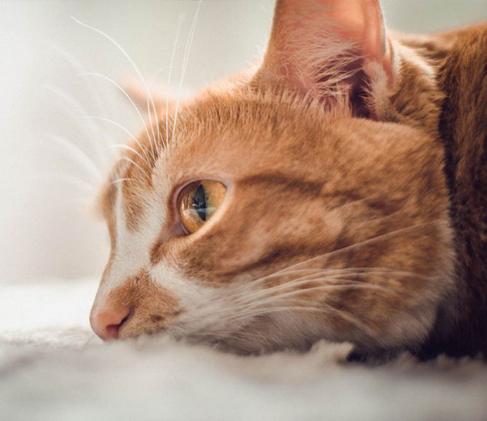 Foster Cat Care, What You Need To Know