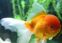 Caring for Sick Fish-petsourcing