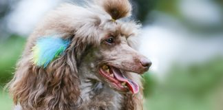 Durable Dog and Cat Petcare Products-petsourcing