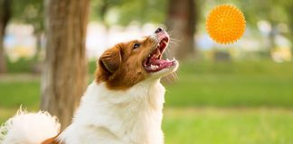 Entertain Your Dog With Treat-dispensing Toys-petsourcing
