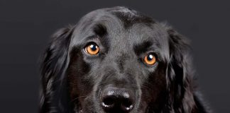 Healthy Skin and Coat in Dogs-petsourcing