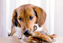Human Foods You Should Never Feed Your Dog or Cat-petsourcing