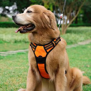 Rabbitgoo Dog Harness No-Pull Pet Harness Adjustable Outdoor-petsourcing
