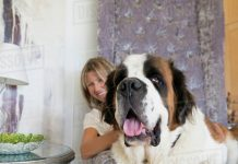 How to Feed Your Large Breed Dog-petsourcing