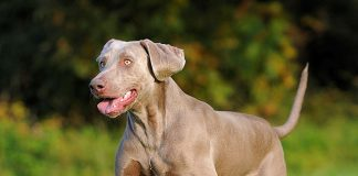 Keeping Your Pet Healthy and Fit-petsourcing
