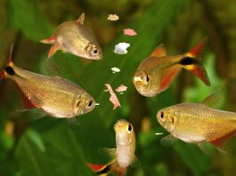 how to Feeding Fish