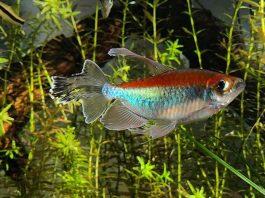 Fish keeping, fish' healthy, comfortable aquarium environment, aquarium, fish trank