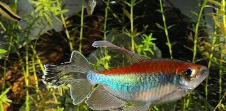 Fish keeping, fish' healthy, comfortable aquarium environment, aquarium, fish trank