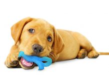 petsourcing-Bringing Home a New Puppy Dog