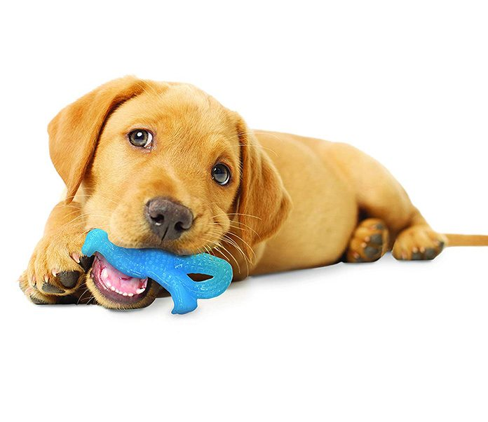 Bringing Home a New Puppy Dog | Petsourcing