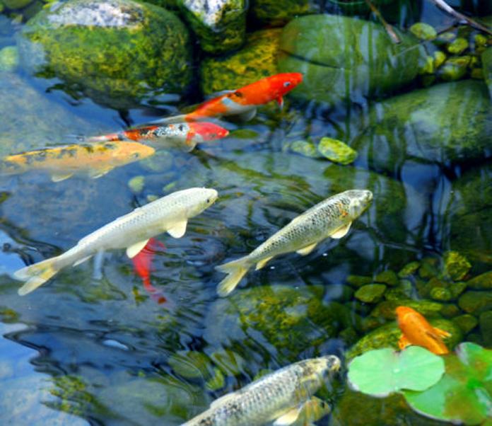 Choosing Your Fish Petsourcing