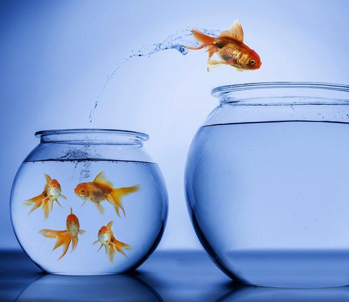 Choosing the Right Aquarium,fish tank,aquarium, Aquarium Material,petsourcing