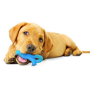 petsourcing-Puppy Chew Toy