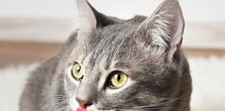petsourcing-how to switch your cat's food?
