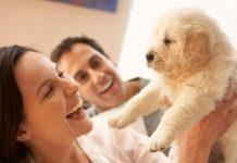 Bringing Home a New Puppy Dog – Puppy Supplies Checklist