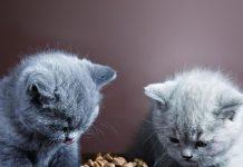 petsourcing- feed kitten, kitten toy, pet collar,