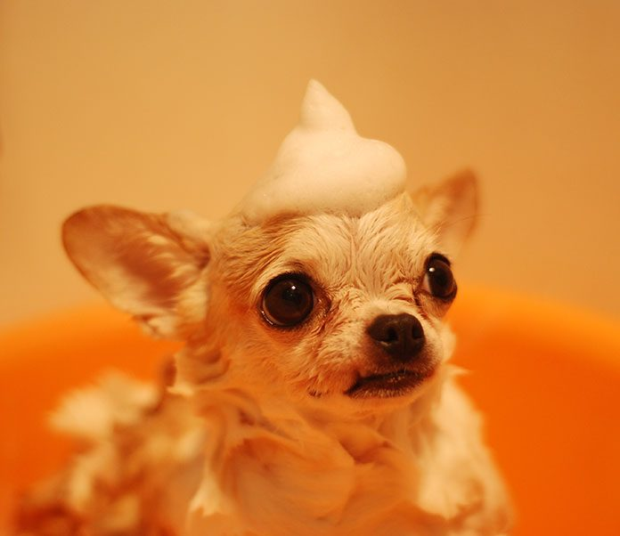 How to Give Your Dog a Bath-petsourcing