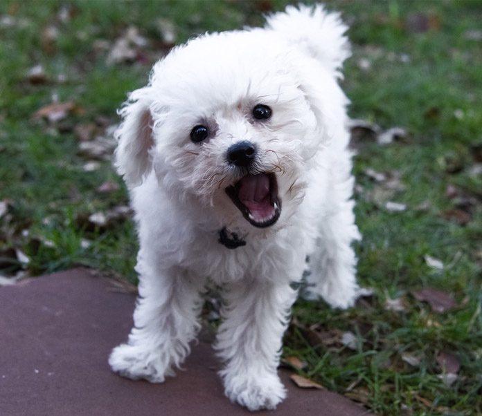 dog barking, stop dog barking, dog bark training, dog training