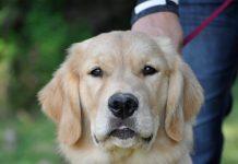 Maximizing Dog Park Time-petsourcing