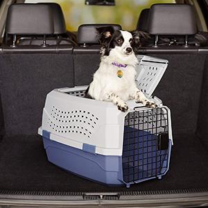 Pet Kennel-petsourcing