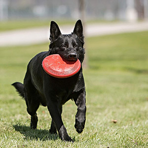 petsourcing-KONG - Flyer - Durable Rubber Flying Disc Dog Toy