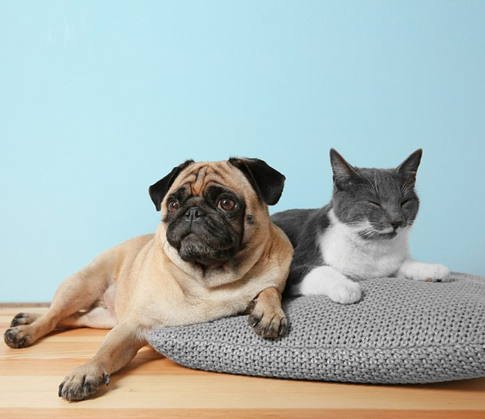 Are lumps and bumps on cats and dogs normal-petsourcing