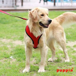 Dog Harnesses-petsourcing
