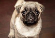 How to Housebreak Your New Puppy-petsourcing