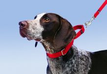 How to Leash Train a Puppy or Dog -petsourcing