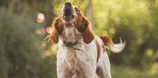 How to Stop Excessive Dog Barking-petsourcing