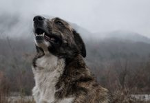 How to Teach an Old Dog New Tricks-petsourcing