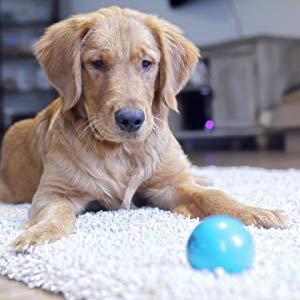 Talking Babble Ball Interactive Dog Toy-petsourcing