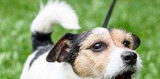Why Do Dogs Bark, and What Do They Mean-petsourcing