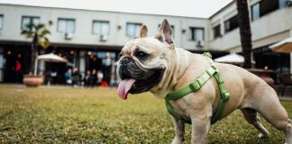 Why Does My Dog Eat Poop-petsourcing