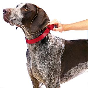 petsafe Collar-petsourcing
