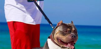 5 Tips for Walking Your Dog This Summer-petsourcing