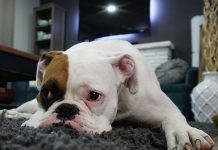 How Do Dogs Get Worms-petsourcing