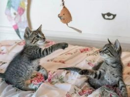 The Power of Your Cat's Playtime-petsourcing