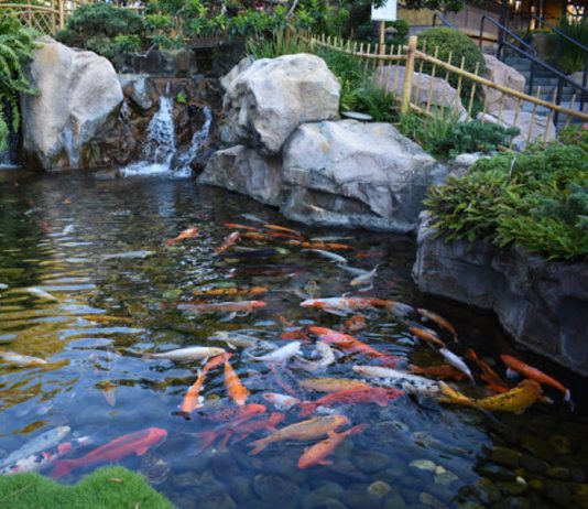 Tips for a Perfect Pond-petsourcing